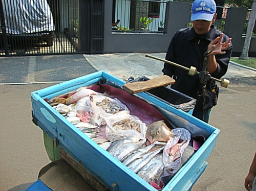 Mobile fishmonger with local fish weighing a purchase. Photo by Tammara Soma.
